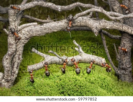 team of ants carries log in old rusty forest