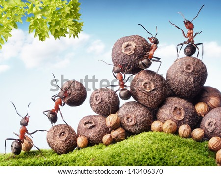 team of ants collecting seeds in stock, teamwork #143406370
