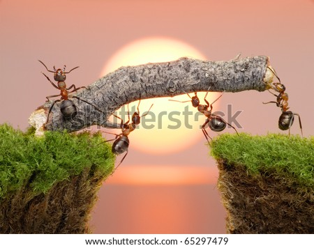 team of ants constructing bridge over water on sunrise or sunset - stock photo