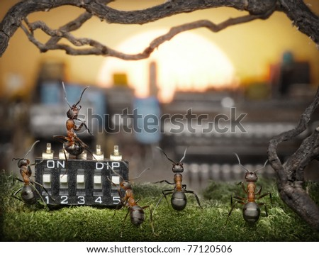 team of ants managing sunrise, teamwork, solar management, fantasy - stock photo
