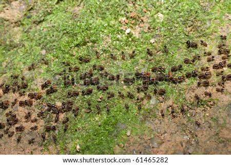 Team of ants with food and egg