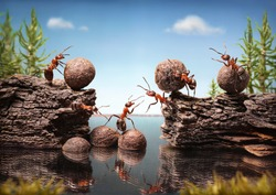 team of ants work constructing dam with stones, teamwork