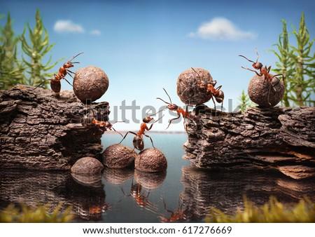 team of ants work constructing dam with stones, teamwork