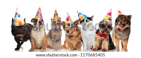 Team Of Seven Happy Cats And Dogs Wearing Colorful Birthday Hats While Standing Sitting