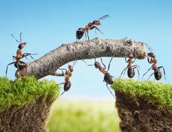 team work, ants constructing bridge