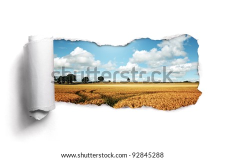 Tearing a paper frame hole to reveal wheat field landscape