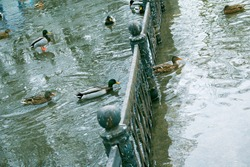Technical problems with the collection system of the reservoir in the park. Walking paths and fences were flooded with water. Ducks swim on the sidewalks.