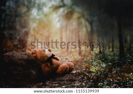 Teddy bear is abandoned in the jungle in the middle of the morning.