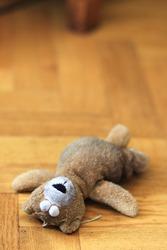 teddy bear / teddy bear/discarded teddy bear lying on the floor