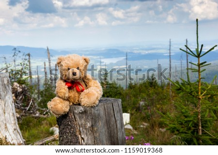 Teddy bear walking in Dreisessel mountain on the border of Germany with the Czech Republic, Bavarian Forest - Sumava National Park, Germany - Czech Republic
