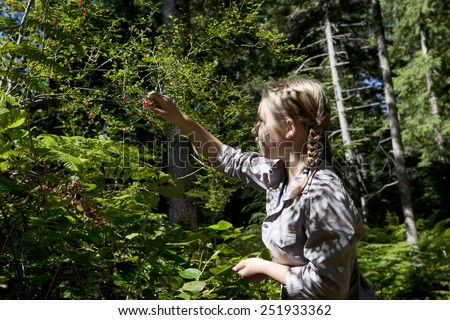 Teenage girl picking red Huckleberries off a vine in a British Columbia Canada forest.
