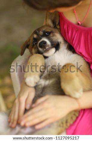 teenager girl hug puppy shepherd dog close up photo on green garden background #1127095217