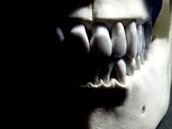 Teeth on a skull that has a creepy smile and a dark side