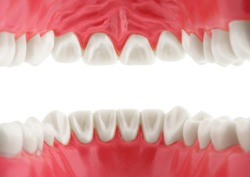 teeth, view from mouth, isolated with path