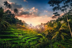Tegalalang Rice Terrace at sunrice. The  rice fields are a big tourist attraction in Bali situated 20 minutes from Ubud