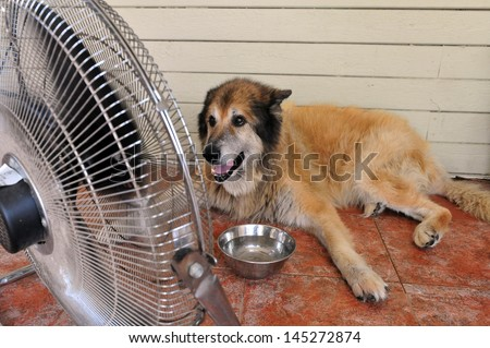 Tel Aviv - Aug 19: Dog Cools Down With Fan And Water During Heat Wave On Aug 19 2010. According To Israel Meteorology Service The Highest Temperature Ever Recorded Was 54c, At Tirat Tzvi 1942.