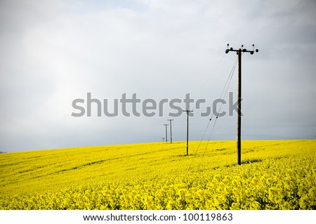 telegraph poles in farmland ...