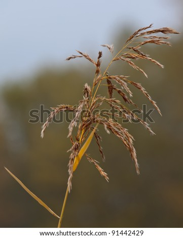 Telephoto about a spike, in autumn