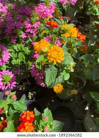 Temecula Floral Garden Outdoor Bontany Stock fotó ©