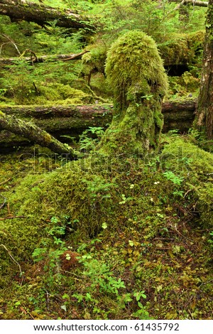 Temperate rainforest, in the Tongass National Forest, Southeast Alaska