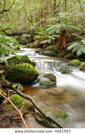 Temperate rainforest, with moss-covered boulders, ancient myrtle beecht trees, and softly flowing river.  Victoria, Australia.