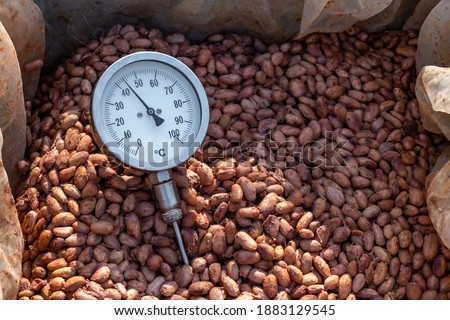 Temperature measurement of cocoa beans fermented in wooden barrels, to maintain the quality of cocoa flavor, Cocoa beans are fermented in a wooden box to develop the chocolate flavor.
