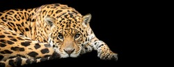 Template of Jaguar with a black background