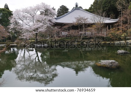 Temple in Kyoto Japan with cherry blossom
