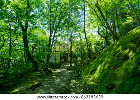 temple with fresh green maple leaves in early summer in  Kyoto #663185659