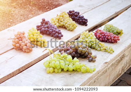 Ten varieties of grapes on a bank in Cappadocia, Turkey. #1094222093