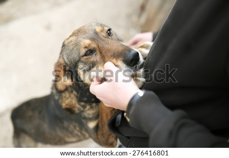 tender feelings of the owner and devoted dog