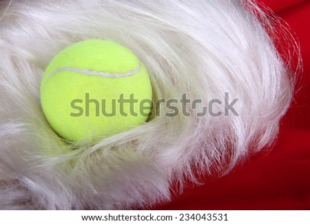 Tennis Ball on a Santa Wig and Suit; holiday tennis
