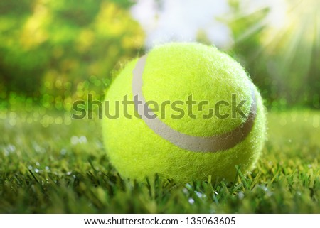 Tennis ball on green grass under the hot rays of the summer sun conceptual of freedom and enjoyment of a sporty healthy outdoor lifestyle and summer vacation