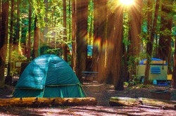 Tent Camping in the Redwood National Park in California, United States. Forest Camping.