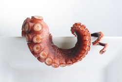 Tentacles of octopus