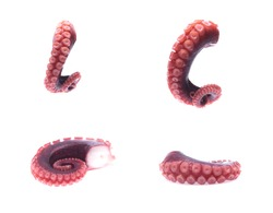 tentacles of octopus isolated on white background (set  mix   collection).