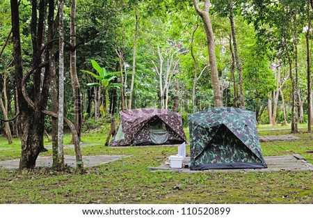 Tropical Highland Forest Highland Tropical Forest