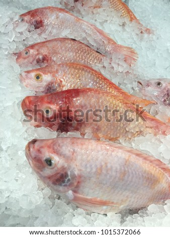 Terapia red fish on ice  in market for sale Foto stock ©