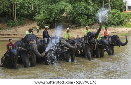 TERENGGANU, MALAYSIA - AUGUST 27, 2016 : Asian elephant splashing with water while bathing at Kenyir Elephant Conservation Village, Terengganu. #620790176