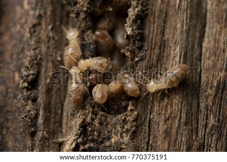 Termite and Termite mound on nature background.