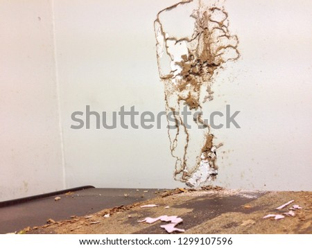 Termite Army, Termites Eat Wood and Wall in the Office Thailand