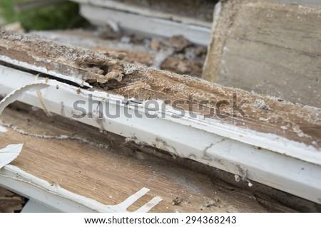 termite damage rotten wood eat nest destroy