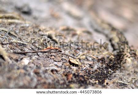 termite escape the rain, DOF picture, travel to new home,