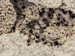 Termite hill thailand stock photo