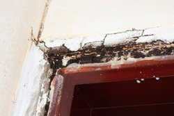 termite infestation on wooden door frame and casting