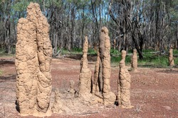 Termite Mounds in the Northern Territory of Australia.