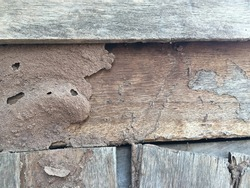 termite nest at old wood for background, nest termite at wood decay, damaged wooden eaten by termite or white ant.