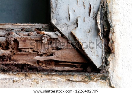 termite nest at wooden wall, nest termite at wood decay window sill architrave, background of nest termite, white ant, background damaged white wooden eaten by termite or white ant