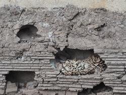 termite nest in layer soil ground animal nature