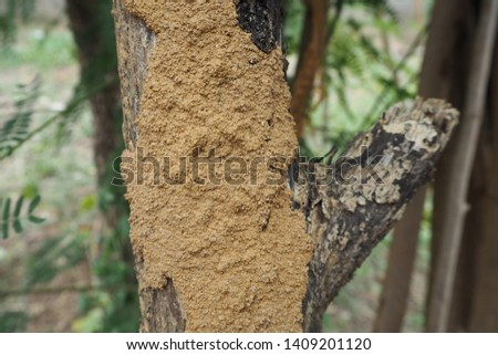 Termite Nest on Tree  (Photo)